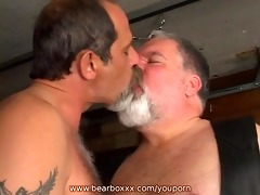 coarse and willing bears